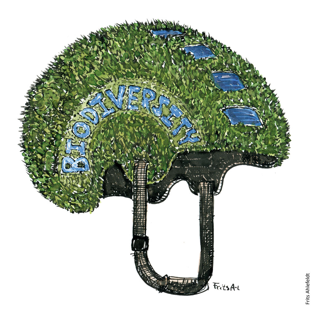 Drawing of Helmet covered in grass and water holes, biodiversity written on the site. Illustration by Frits Ahlefeldt. Drawn journalism