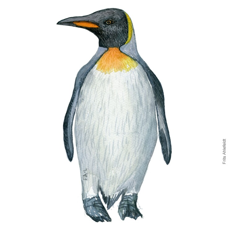 Watercolor illustration of King penguin
